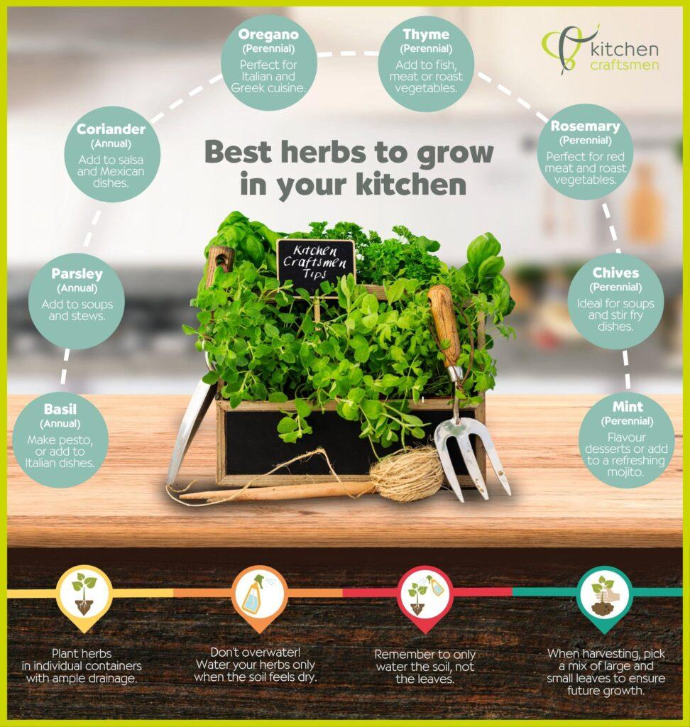The Best Herbs To Grow In Perth Kitchens - Kitchen Craftsmen